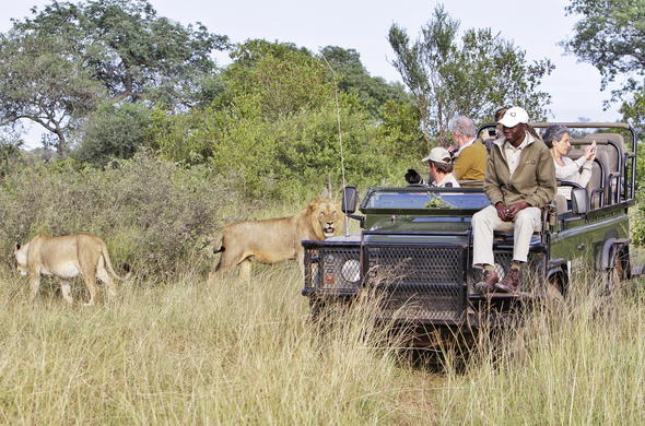 Enjoy a game drive and spot lions and other wildlife in the reserve.