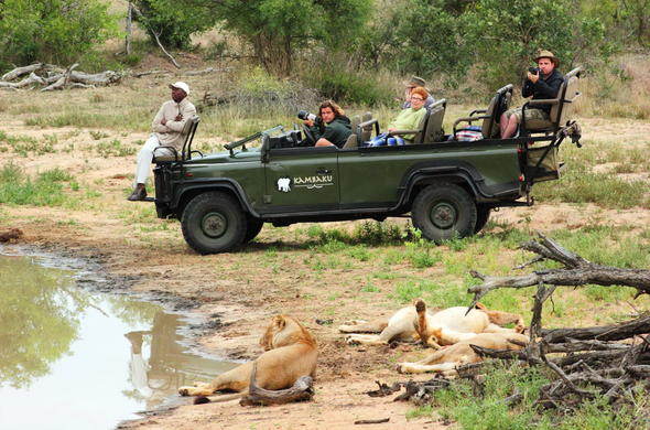 Lions relaxing by a busy waterhole spotted during an afternoon safari.