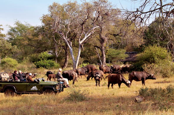 Guests on game drive in the Timbavati Private Nature Reserve.