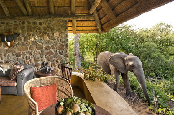 Relax in the lounge and take in the natural beauty of the African bush.