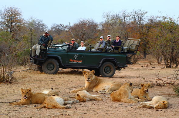 Get up close with the lions in the Timbavati Game Reserve.