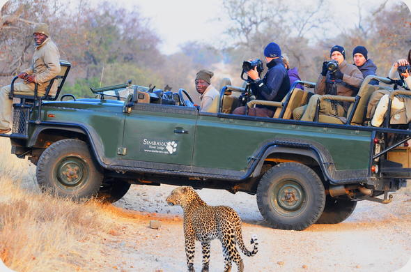 Guests on a guided game drive in the reserve.