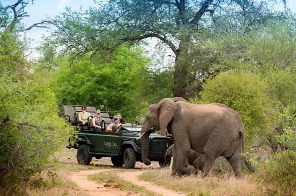 See mother and elephant calf at Timbavati Game Reserve.
