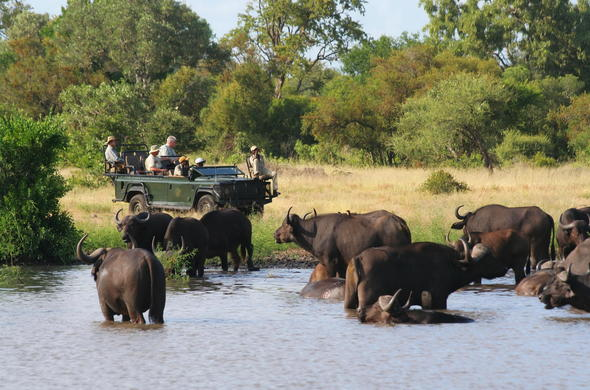 Guests on a morning game drive in the Timbavati Game Reserve.